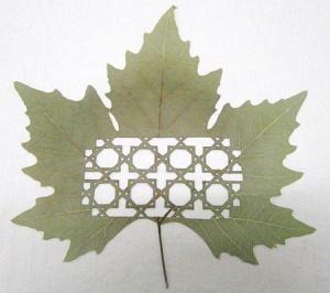 leaf06