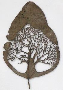 leaf08