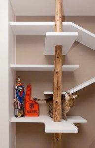 catbookshelves05
