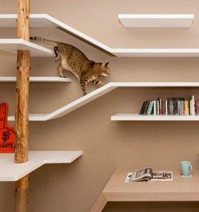 catbookshelves08
