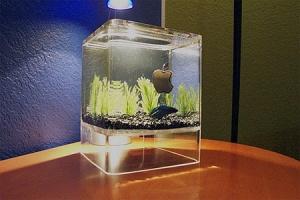 aquarium16